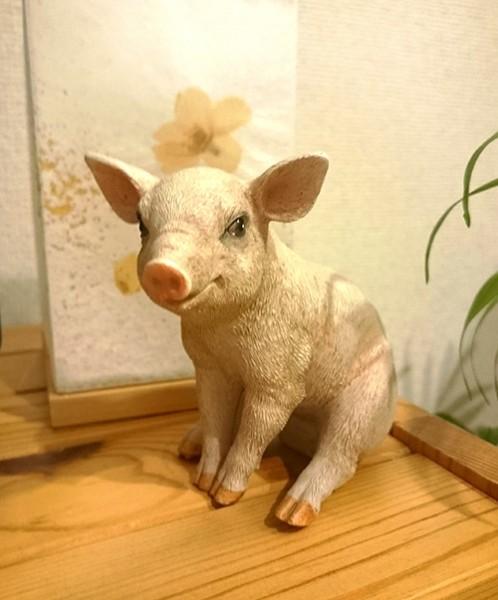 我が家の住人(豚)
